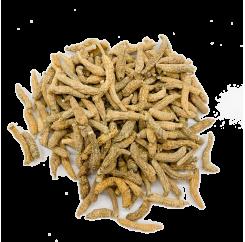 American Ginseng (P1)| 美国野山泡参 (P1)
