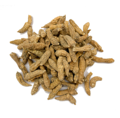 American Ginseng (P2)| 美国野山泡参 (P2)